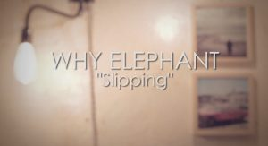 why-elephant