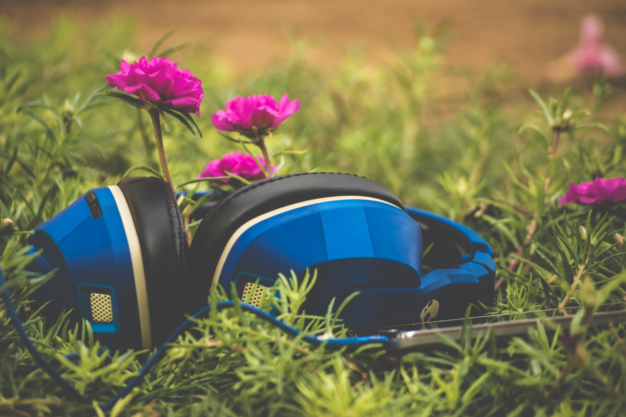 plants+music